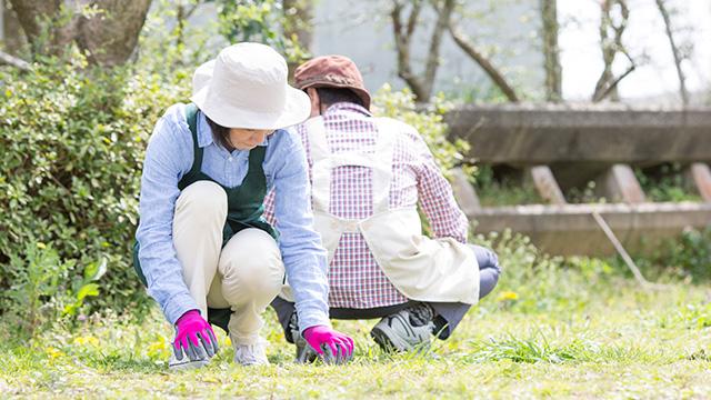 庭の草むしりを行うタイミングは?