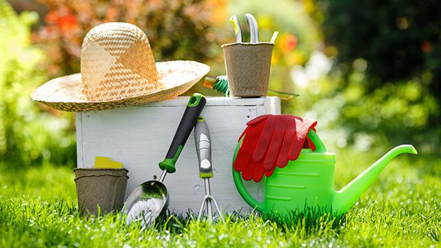 庭の草むしりを始めよう